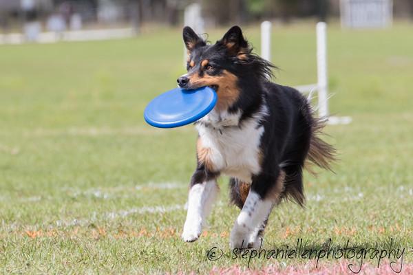 _MG_3113Up_dog_International_2016_StephaniellenPhotography.jpg