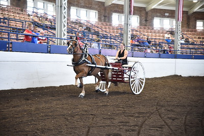 Haflinger Ladies Cart
