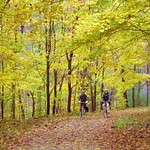 Shaw Weil Photo Fall Scene.jpg