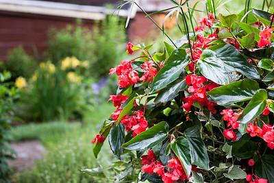 Koller Flowers