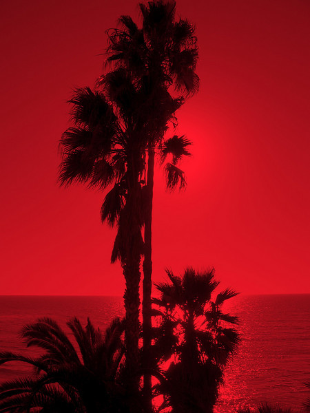 Red Palm