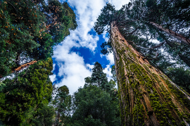 Reach - Forest Falls, CA, USA