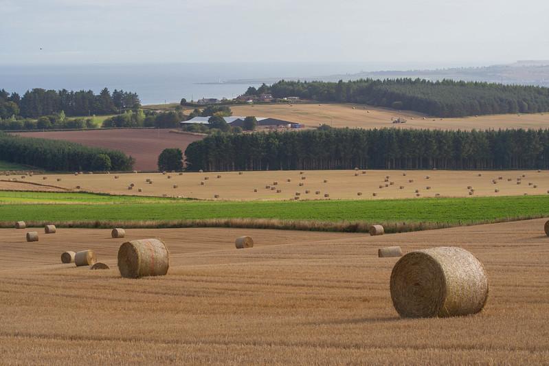 Aberdeen_Criggie_Field 4_18.jpg