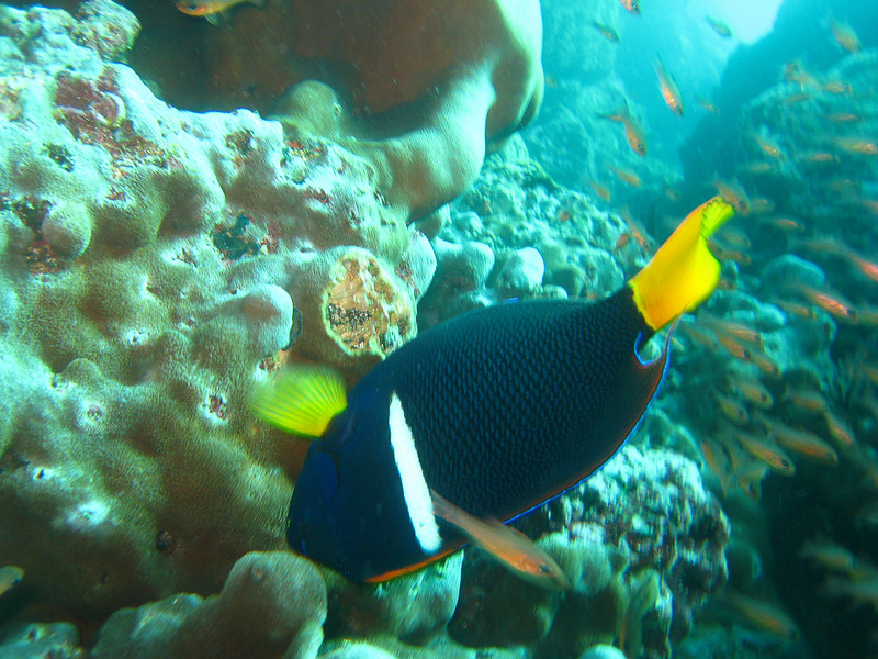 Diving in the Galapagos (123 of 392)