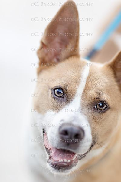 Kari - Pet Portrait 2017