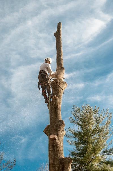 Tree climber_5455.jpg