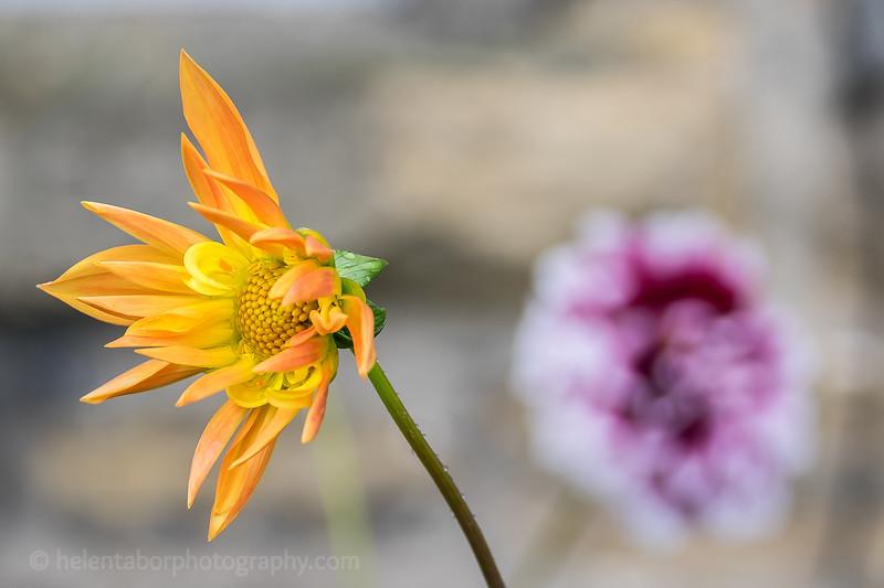 Louise's flower close-ups-8.jpg