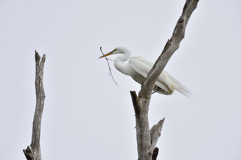 Elkorn Slough - Moss Landing CA USA
