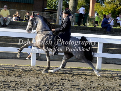 CLASS 12 WALKING PONY 17 & UNDER SPEC