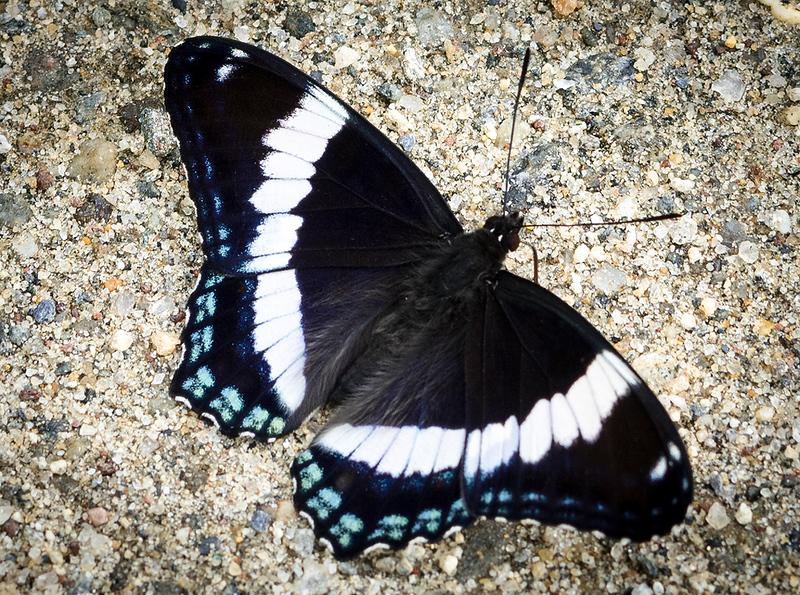 Butterfly 27.jpg