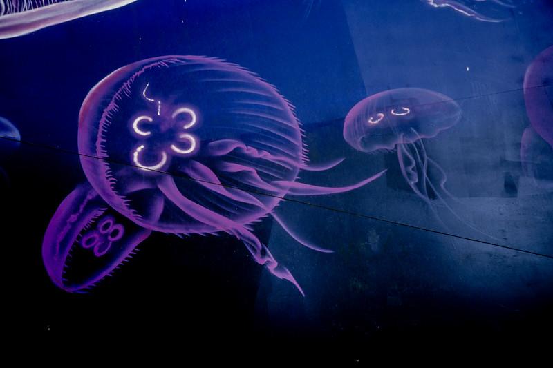 Sea Life Acquarium
