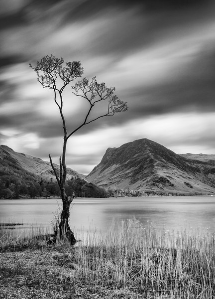 That Buttermere Tree