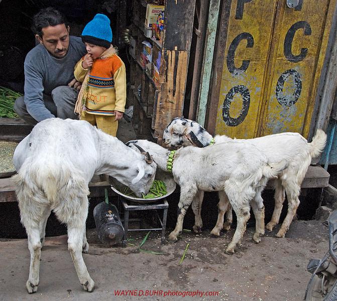 INDIA-2010-0201A-79A.jpg