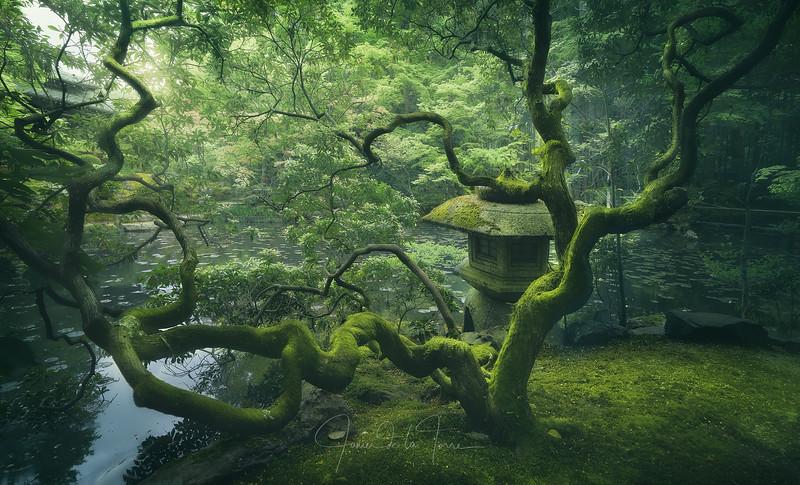 Japanese Tree.jpg