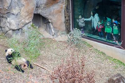 No snow zoo February 20, 2016