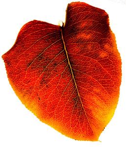 Autumn Leaves 2012