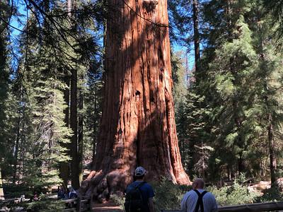 Sequoia 2018 All Photos