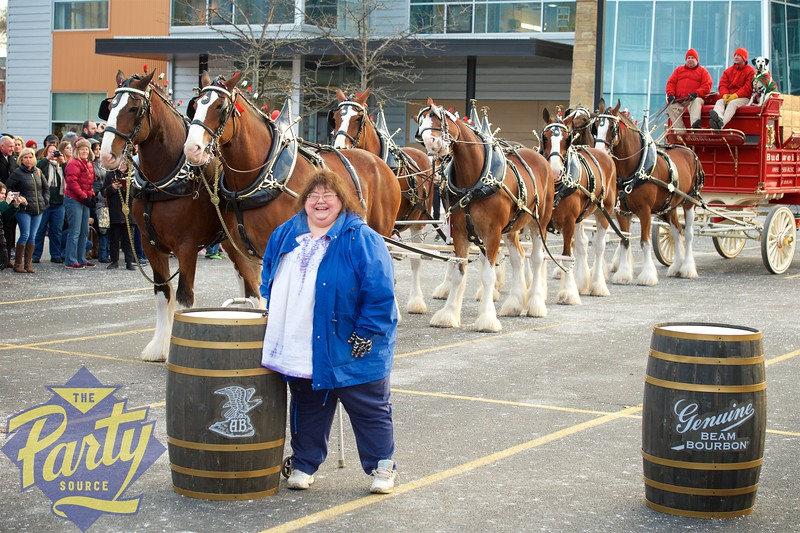 Clydesdale Portraits 159.jpg