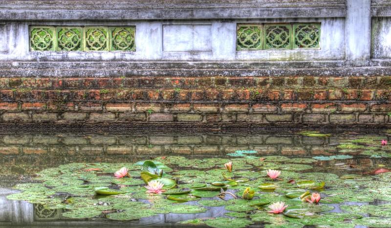 Lotus pond at Temple of Literature - Hanoi