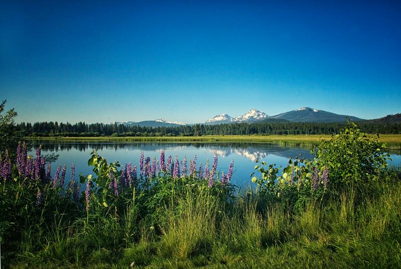 Summer Lupine_Phalarope Lake_Sisters_KateThomasKeown_DSC0158 KTK.jpg