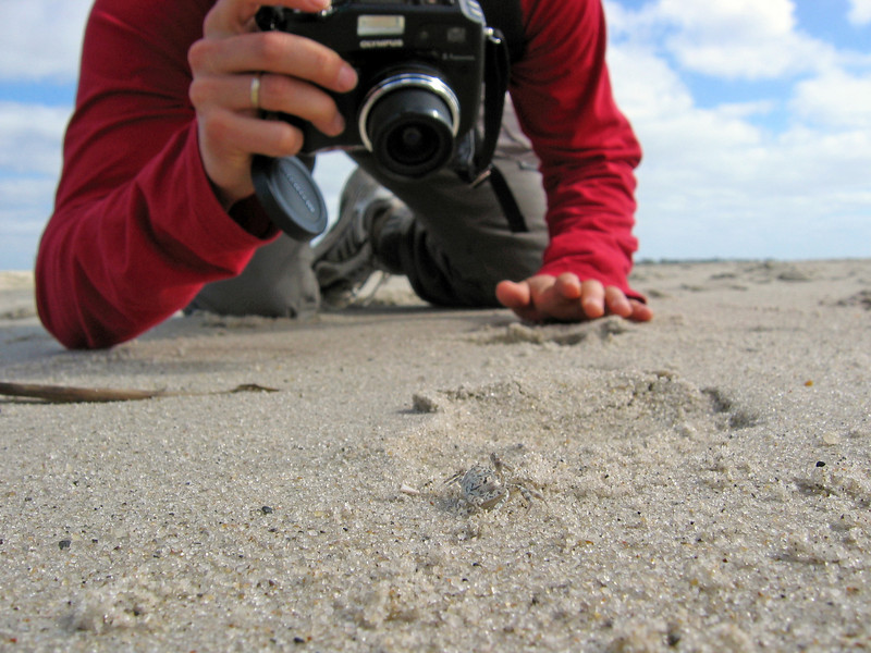 Yura photographs crab in Cape May.jpg