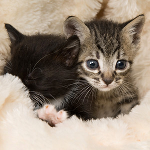 Adopted: 3 Little Kittens