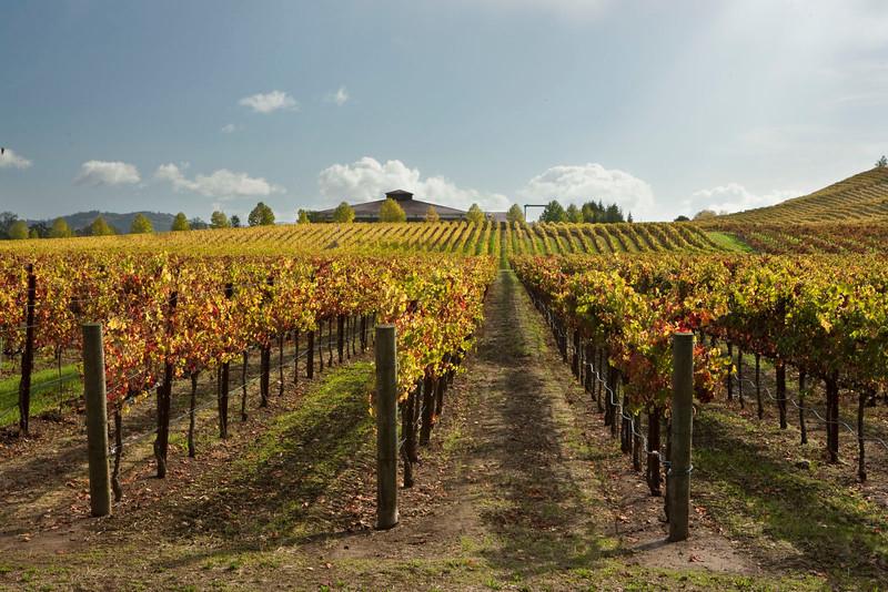 Alexander Valley vineyard
