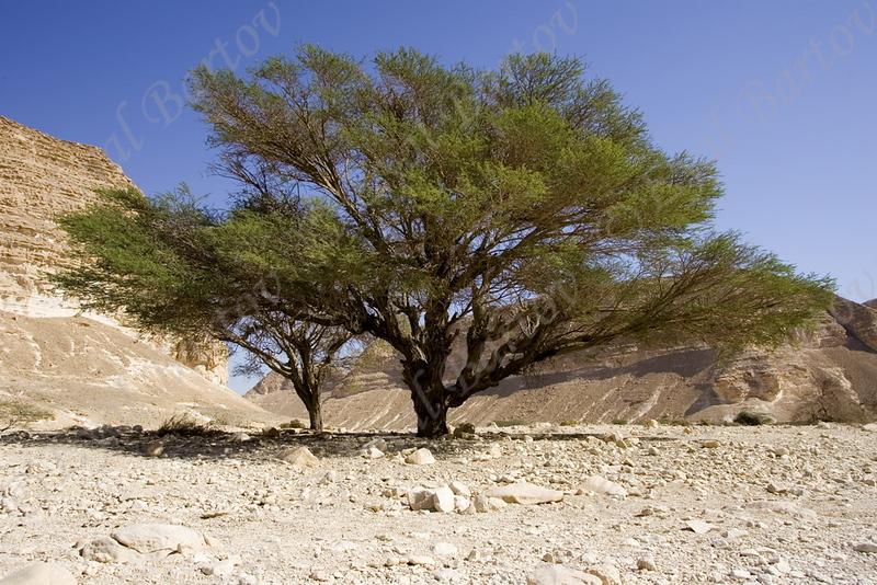Arava 01.jpg