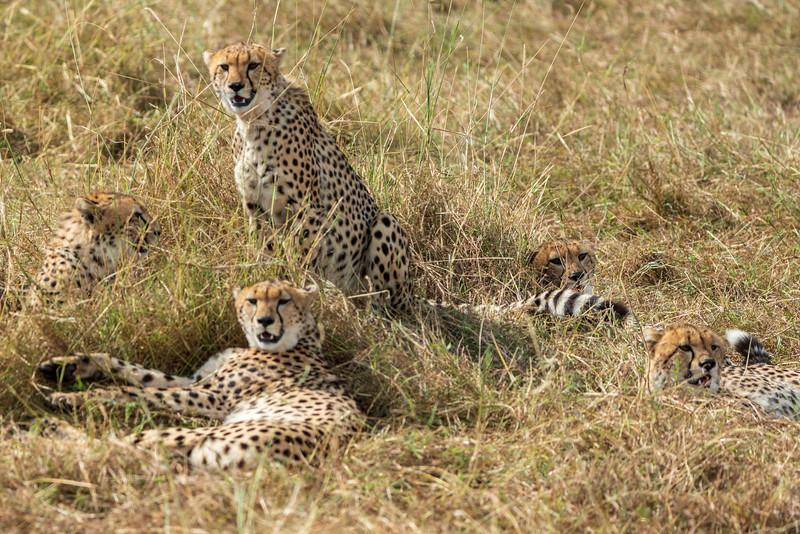 Kenya 2015-07226.jpg