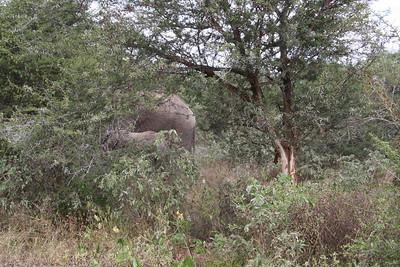 Kruger NP Elephant Herd