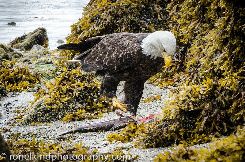 Alaska-0164.jpg