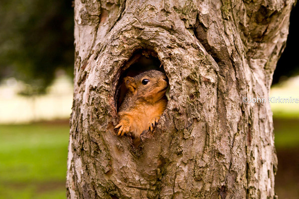 Lake Merritt: Insects and squirrels