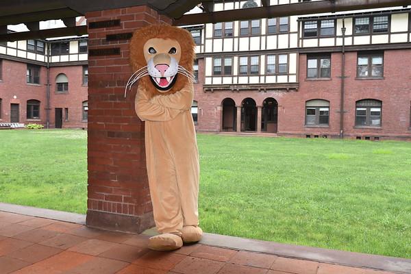 Mascot Lion