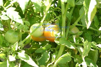 2010 Prototype 8955 Garden