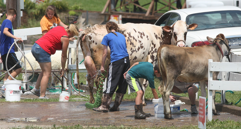 . Competitors wash their cattle as they prepare for showing     at the Boonville Oneida County Fair on Tuesday, July 22, 2014 in Boonville. the fair runs through Sunday, July 27, 2014.  JOHN HAEGER-ONEIDA DAILY DISPATCH @ONEIDAPHOTO ON TWITTER