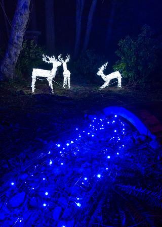 2018 Japanese Gardens Christmas