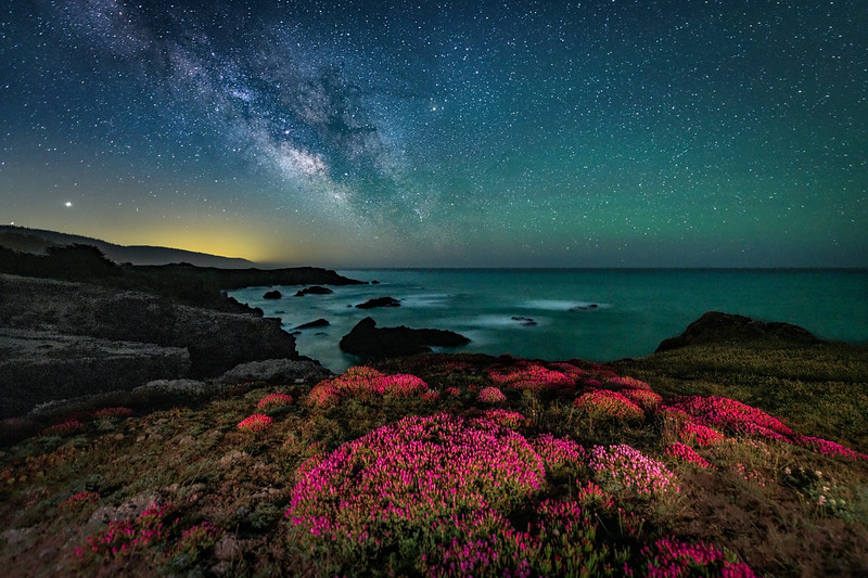 Black Point Flowers & Milky Way, Study 2, Sea Ranch, California