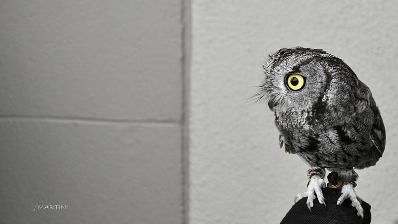 OWL EYE 12-14-2014.psd