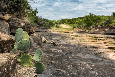 View out of a dry river bed from behind a cluster of cacti