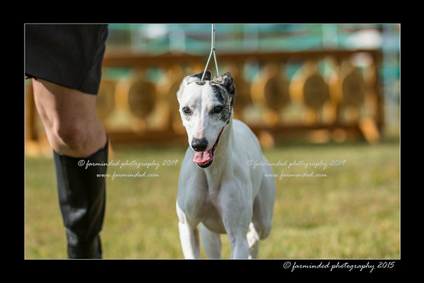 07/23/2015 - Alaska Hound Group Association