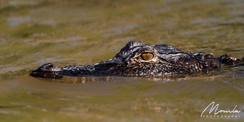 Swamp Tour-4.jpg