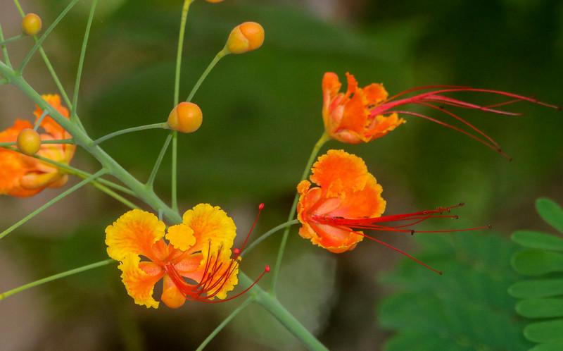 orange flower in the garden