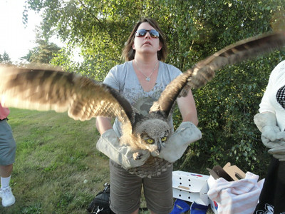 "3 ""Great Horned Owl"" Release"