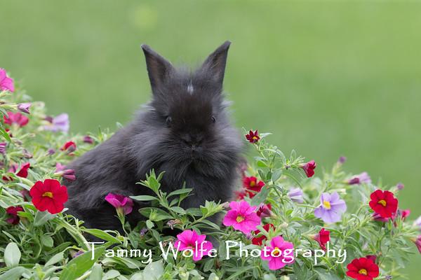 Rabbit, Domestic