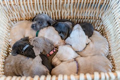 McNider Puppies