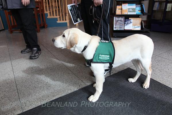 Service Puppies Mar 3, 2012