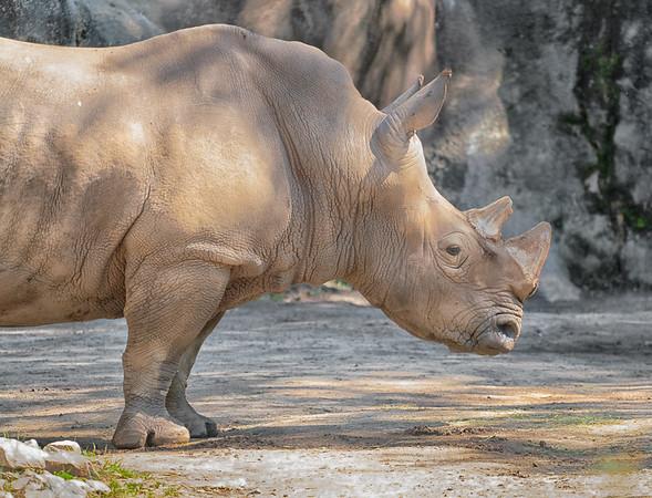 Columbia Zoo - May 2021