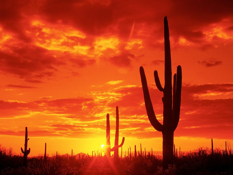 Burning Sunset, Saguaro National Park. Arizona.jpg