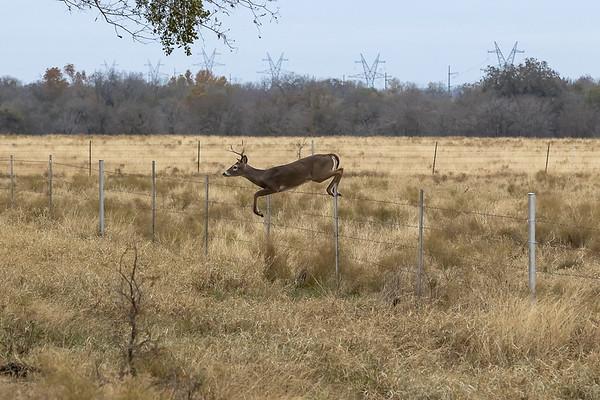 Ranch Deer 12-2020