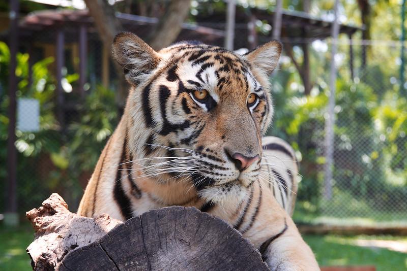 Roewe_Thailand 75.jpg